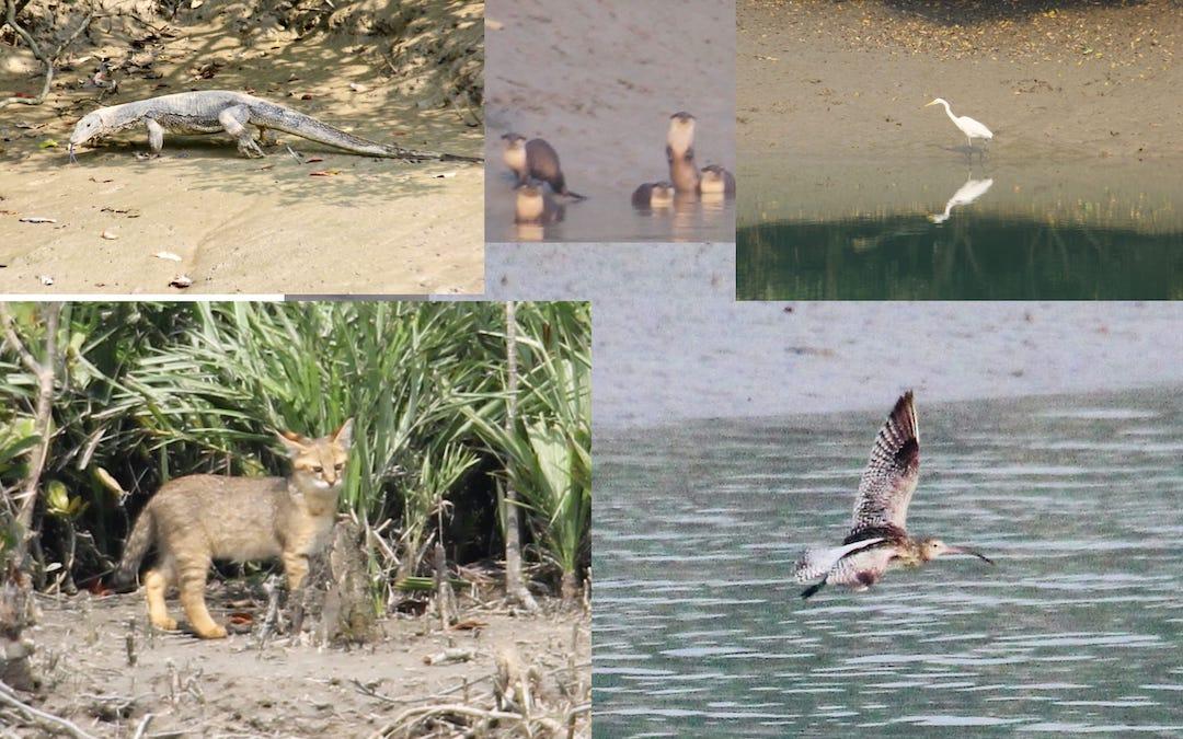 Sundarbans Animals